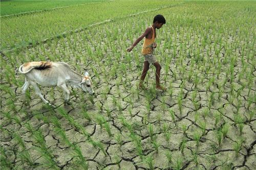 Drought affected India