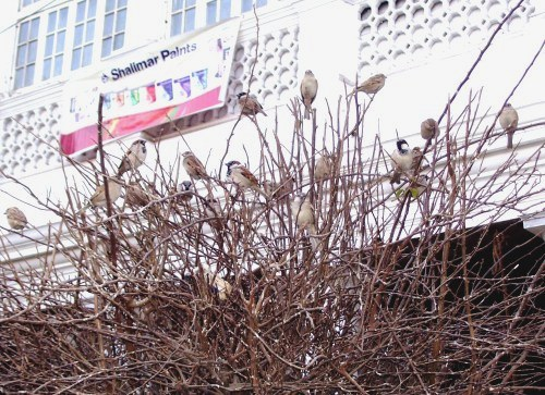 Sparrows in CP