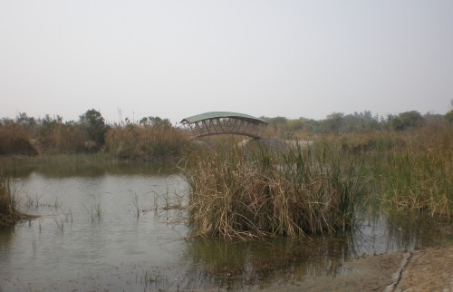 Invite: Talk on Wetland Ecology and Yamuna Biodiversity Park