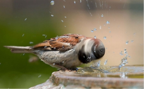 Install a Bird Bath – A Friend in Need is a Friend Indeed