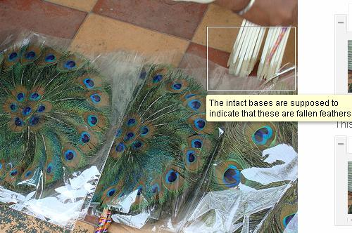Peacock Feather Trade