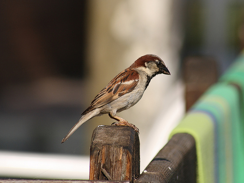 Invite: Talk on the Beautiful World of the Sparrow at WWF India