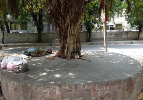 tree-concretised-anand-vihar-delhi