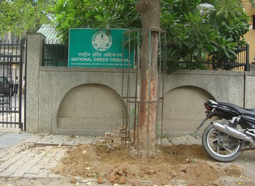 Trees Outside National Green Tribunal Deconcretized