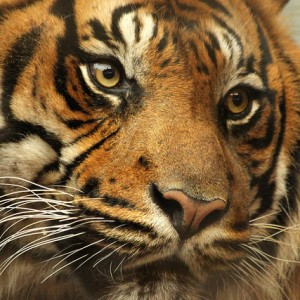 Invite to Panel Discussion on Do Tigers Drink Blood…?