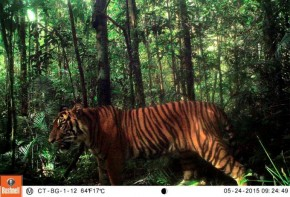 29 Species Camera Trapped in North Sumatra