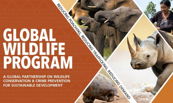 India to Host Global Wildlife Program to Address Illegal Wildlife Trade