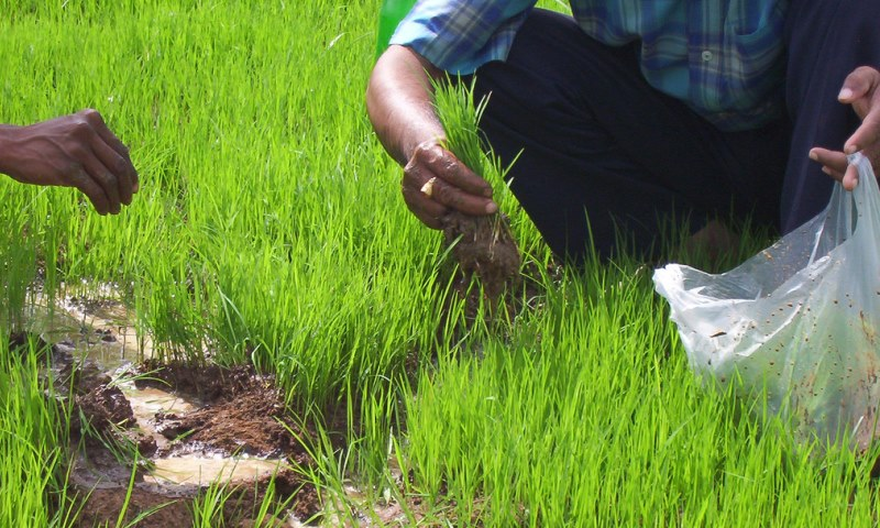 Here Is How Climate Change Impacting Agriculture in India