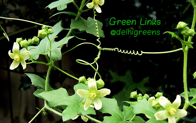 Green Links