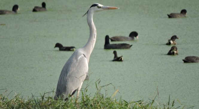Migratory Birds: The Only Good Thing Left About Delhi's Winters