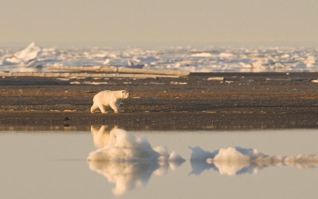 Western Exploitation of Arctic Region Could Induce Dooms Day