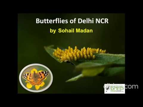 Watch (44 mins): Butterflies of Delhi NCR