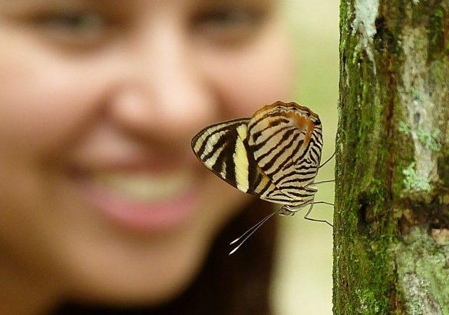 JNU Plans a Butterfly Park