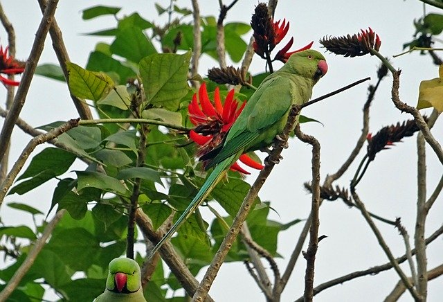 trees of delhi and birds