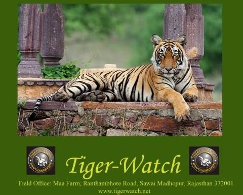 tiger watch conservation