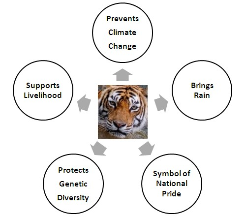 Top Five Reasons Why You Must Act to Save the Tiger