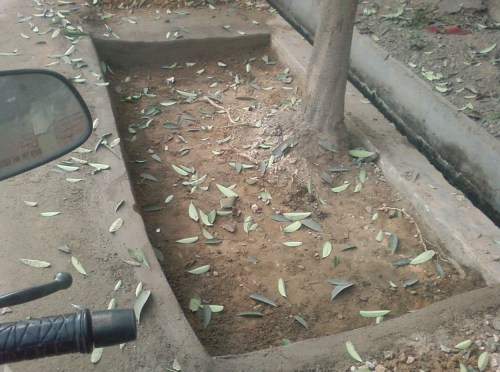 DG Blog IMPACT: Students Use RTI to Dechoke Trees
