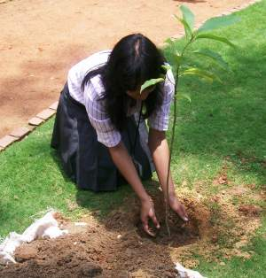 Carbon Offsetting Plantation Programme by Advit Foundation