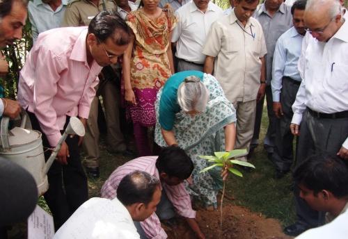 Delhi CM planting a tree in ABP