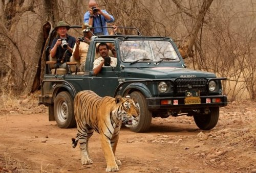 Registration Open for Conservation Leadership Course by Tiger Watch