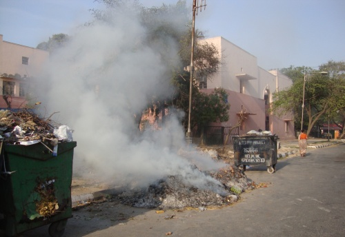 Unabated Burning of Leaves Calls for Urgent Attention