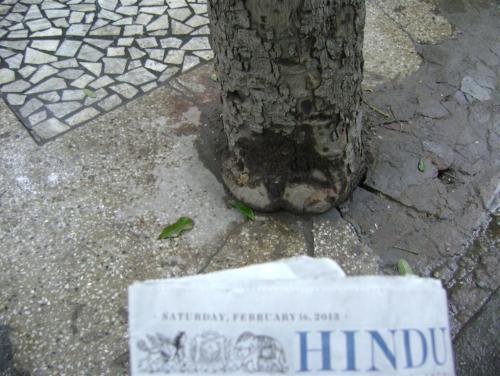 Tree concretised