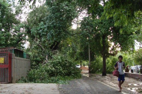 Invite: Toxics Link Public Lecture on Delhi's Dying Trees at IIC