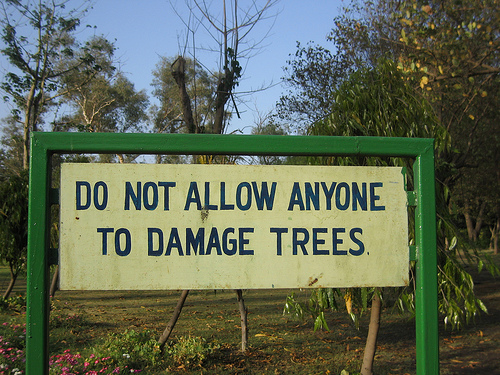 To Keep the Trees Alive, It's Becoming A Struggle Against the Civic Agencies. Why?