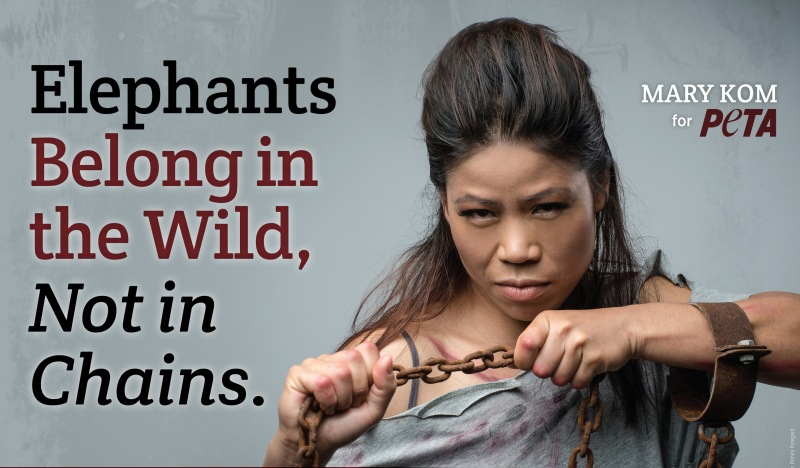 Mary Kom Fights for the Mighty Elephants