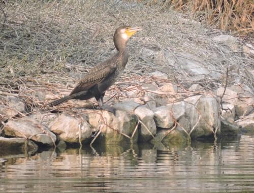 Invite: World Wetlands Day 2015 Celebration at Yamuna Biodiversity Park
