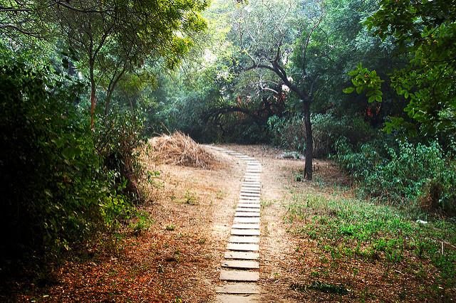 delhi-forests