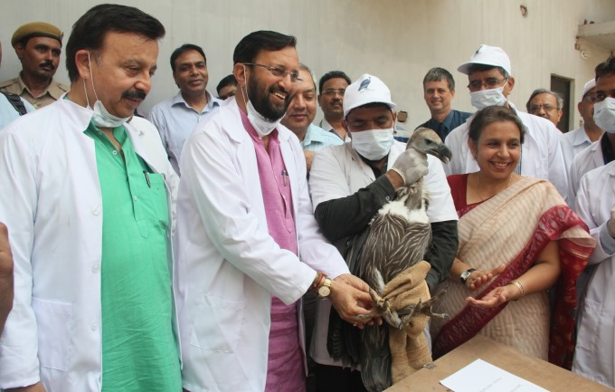 Haryana Takes Up Asia's First Vulture Reintroduction Programme