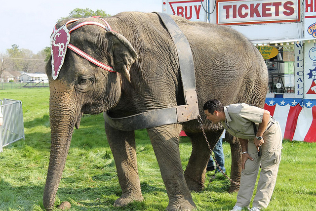 New York Bans Use of Elephants for Entertainment
