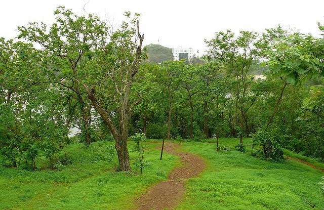 Tree Plantation by Avashya Foundation Under Maitree Initiative