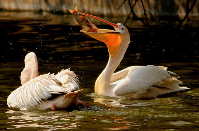 Top Ten Bird Watching Sites in Delhi