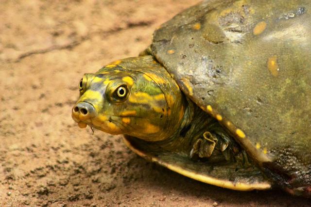 Turtle Sanctuary to be Set up at Allahabad under Namami Gange