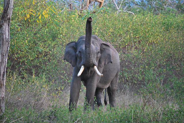 List of 30 Elephant Reserves of India, 30th Declared Recently in Nagaland