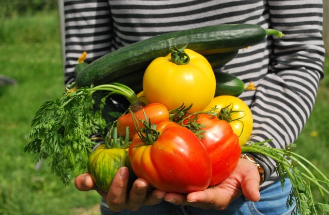 Steps for Growing Food In Your Balcony This Summer