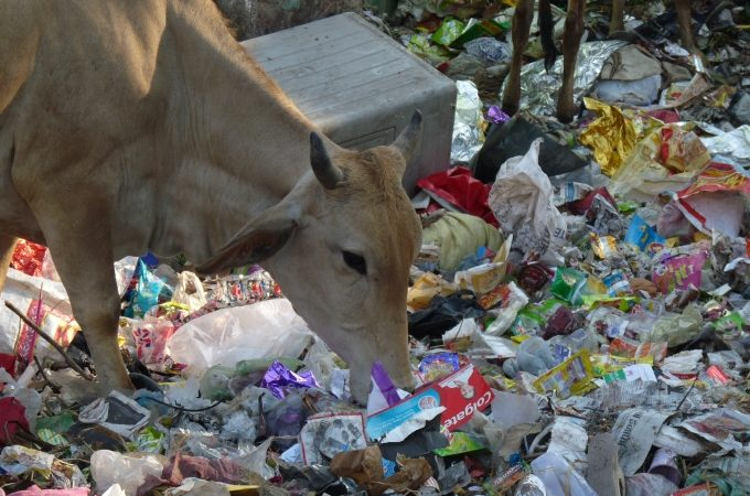 MCD Gives a Final Push: Segregate Waste in Your RWA or Pay Penalty