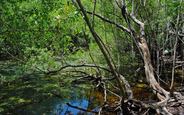 A Mobile App by Godrej for the Conservation of Mangroves
