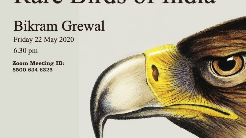 Webinar on Birds to See Before You Die by Bikram Grewal