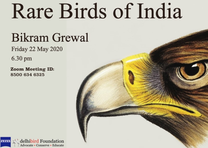 Webinar on Birds to See Before You Die by Bikram Grewal