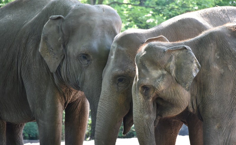 Better to Have Empathy than Sympathy for Saving Elephants