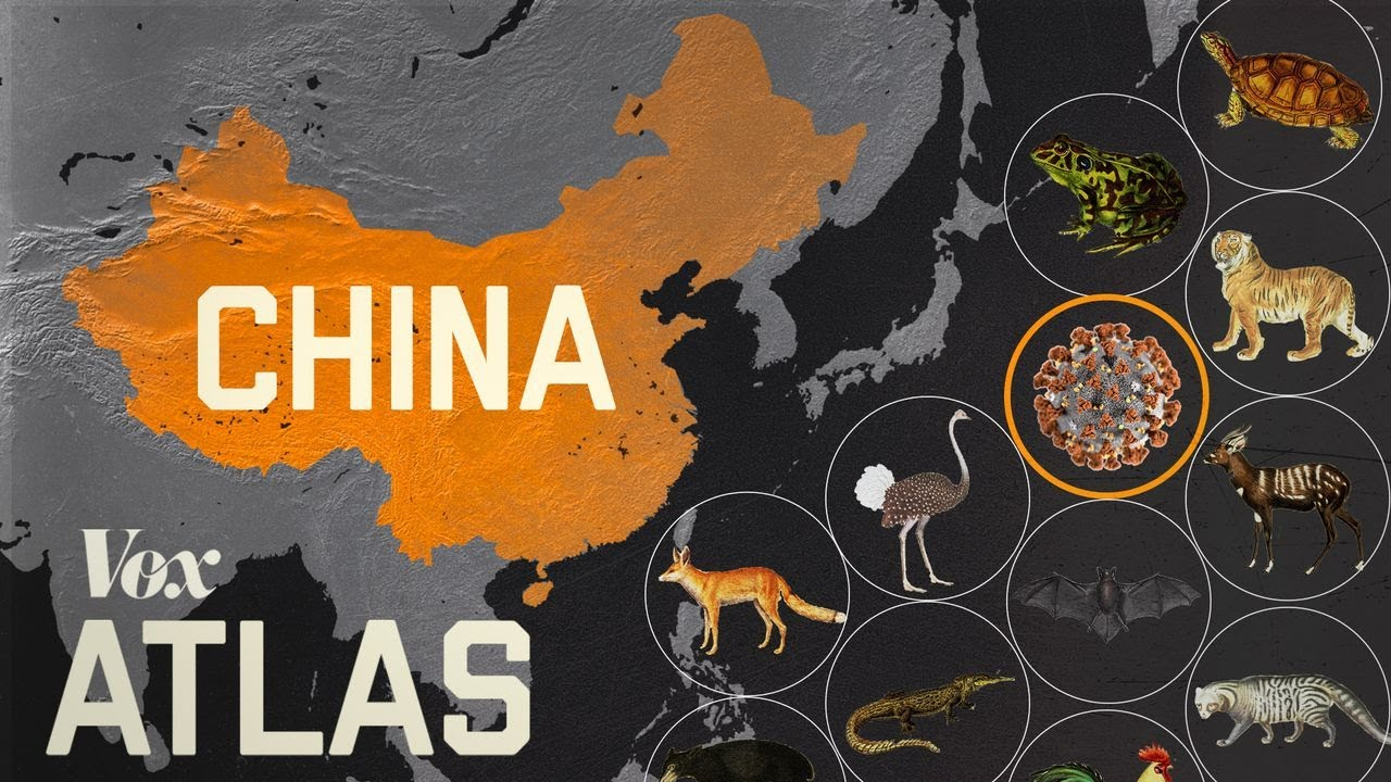 Watch (9 mins): Coronavirus and Chinese Wildlife Markets