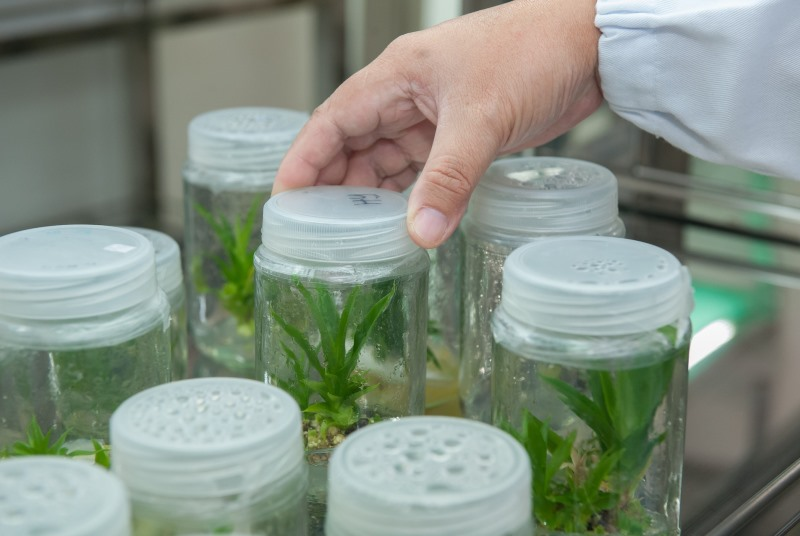 5 Uses of Biotechnology in Environmental Protection