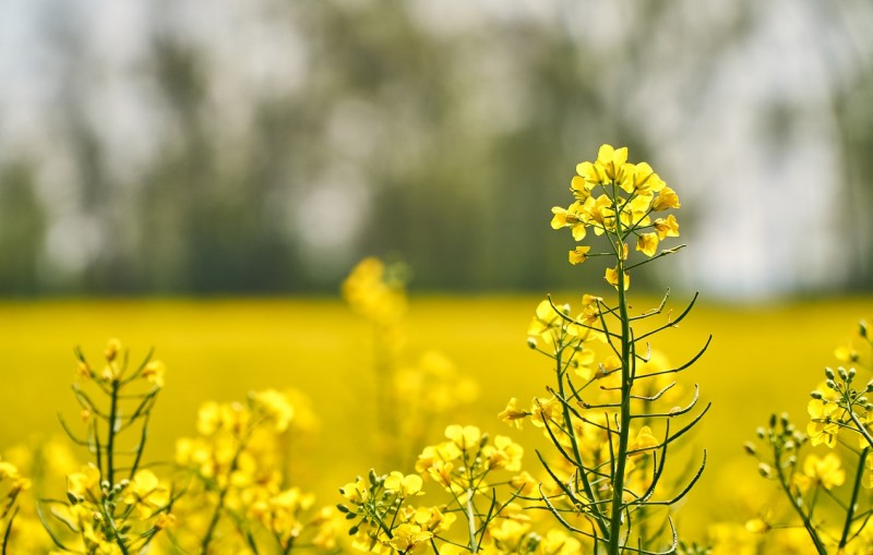 Advantages and Disadvantages of Biofuels for the Environment