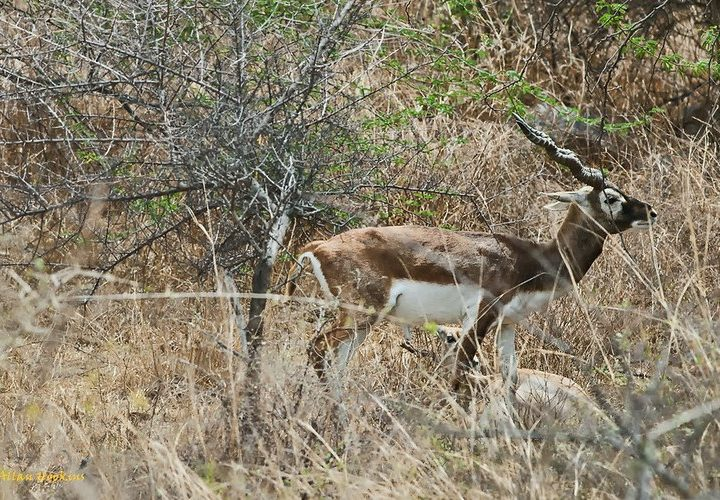 Ten Wild Animals You Didnt Know Lived In Delhi