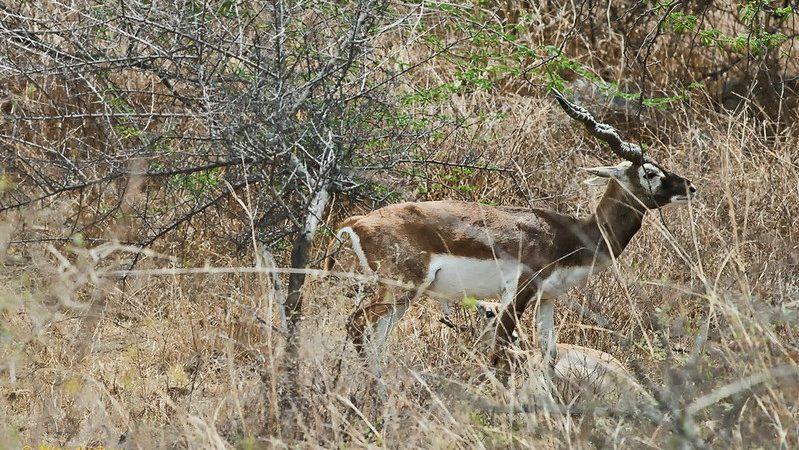 Ten Wild Animals You Didnt Know Lived In Delhi