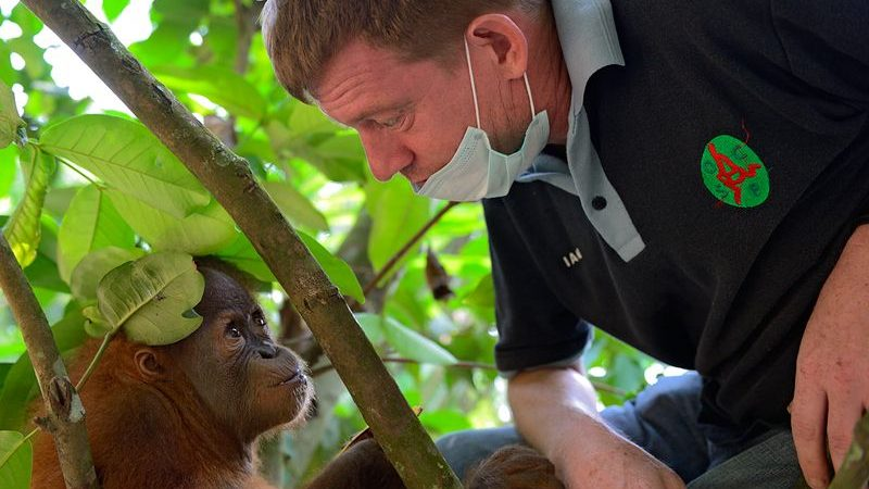 Orangutan Conservationist Ian Singleton Awarded OBE