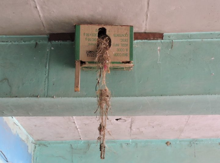 Simplest Bird House that We Can All Learn to Make